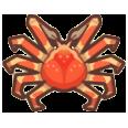 Spider Crab Image