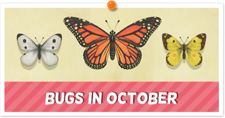 Animal Crossing New Horizons (ACNH) Bugs September