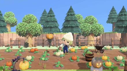 ANCH - minto - Pumpkin Patch Idea 2