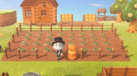 ANCH - Yuuchanman - Pumpkin Patch Idea 4