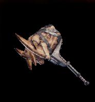 Fang Bone Layer Image