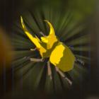 Energetic Rhino Beetle Icon