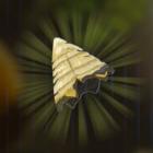 Bokoblin Horn Icon
