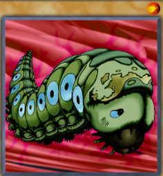 Petit Moth