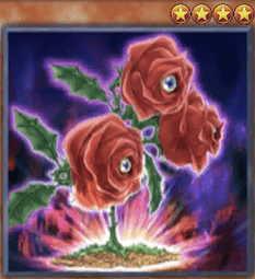 Revival Rose