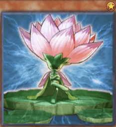 Samsara Lotus