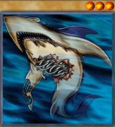 Corroding Shark