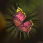 Summerwing Butterfly Icon