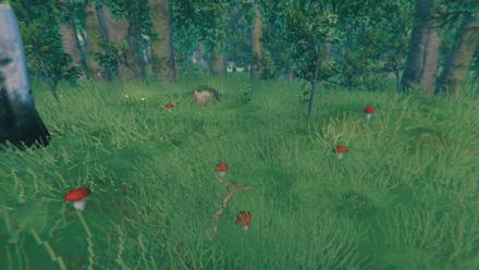 Mushrooms in the Meadows
