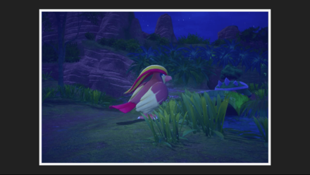 Pidgeot 1 Star Photo
