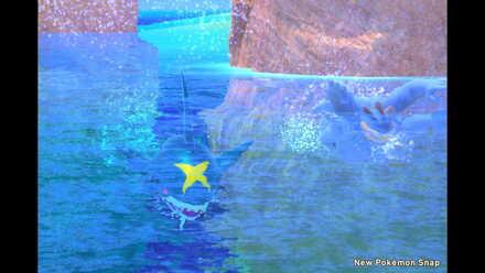 Sharpedo 4 Star Photo